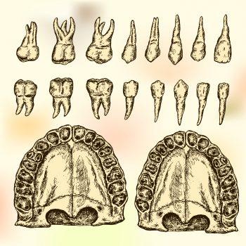 Old chart of teeth